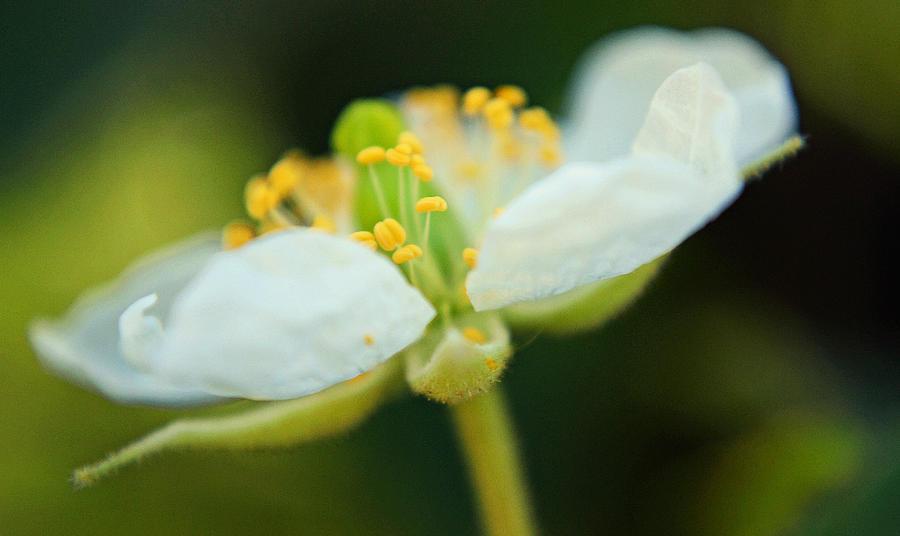 Flower Photograph - Empty Souls by Melanie Moraga