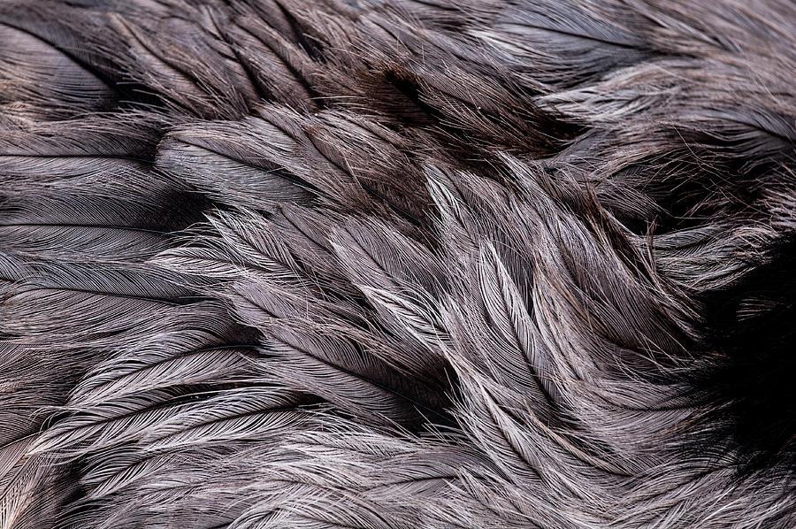 Feathers Photograph - Emu Feathers by Hakon Soreide