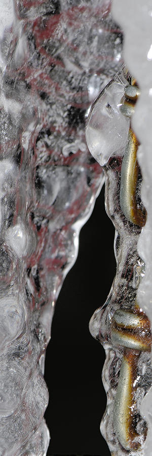 Ice Photograph - Encased by Lisa Knechtel