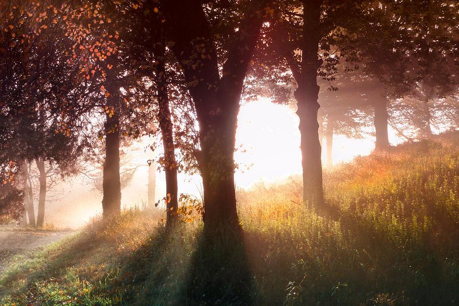 Appalachia Photograph - Enchanted Meadow by Debra and Dave Vanderlaan