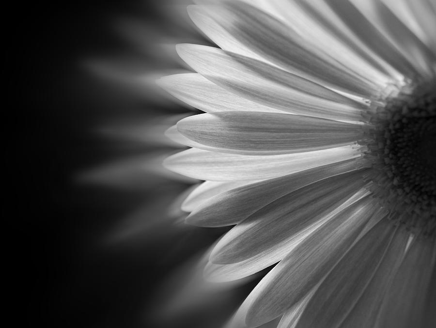 Black And White Photograph - Enchanting by Ivelina G