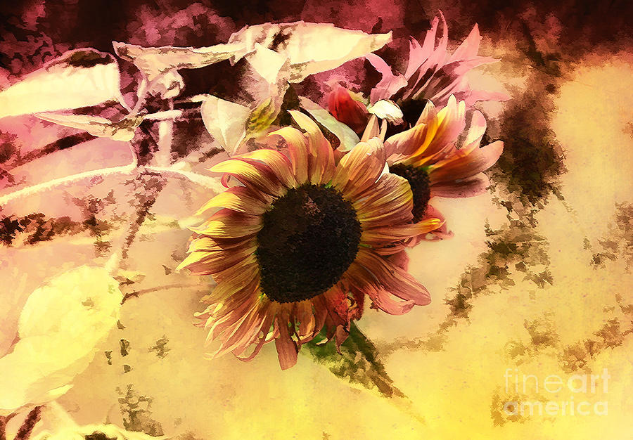Flowers Photograph - End Of Season by Elaine Manley