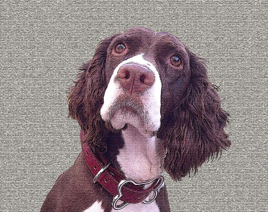 Springer Spaniel Photograph - English Springer Spaniel 2 by Jesus Nicolas Castanon