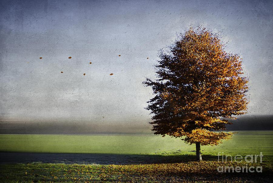 Autumn Photograph - Enjoying The Autumn Sun by Hannes Cmarits