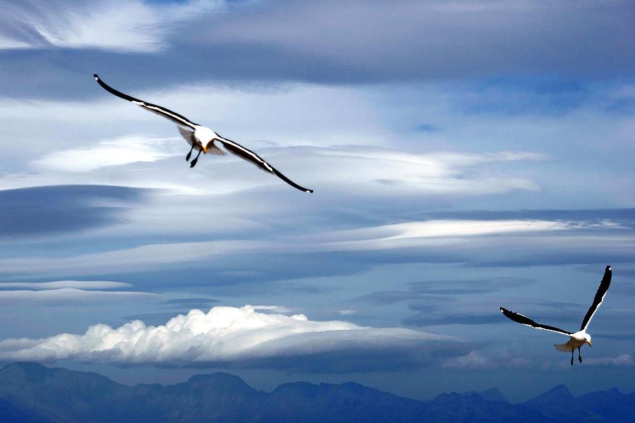 Fine Art America Photograph - Enjoying The Sky by Andrew  Hewett