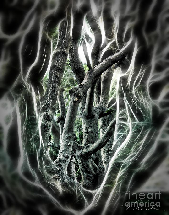 Entangled Photograph - Entangled Worlds by Danuta Bennett