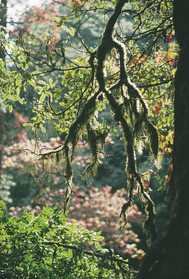Epiphytic Photograph - Epiphytic Moss by Doug Allan