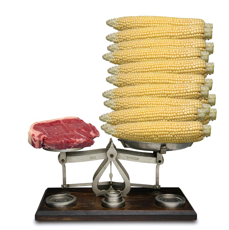 Balance Photograph - Equivalent Cost Of Meat by Victor De Schwanberg