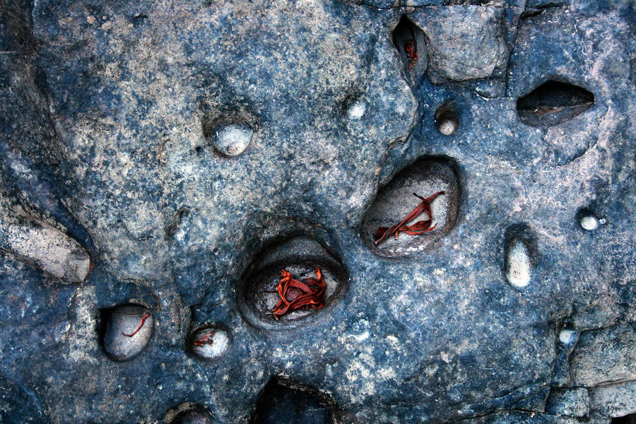 Eroded Rock With Dried Leaves Photograph