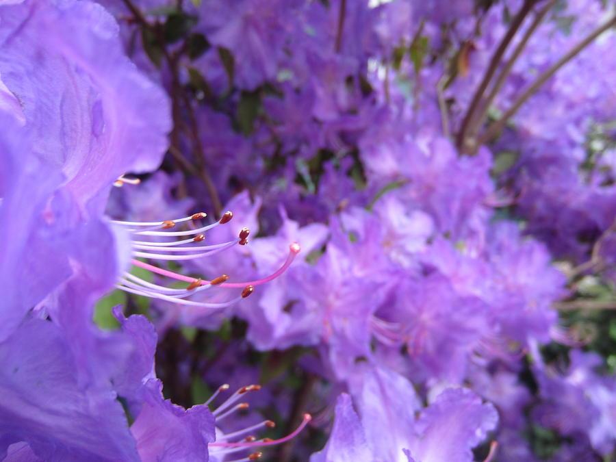 Flower Photograph - Escape by Lexis Cook
