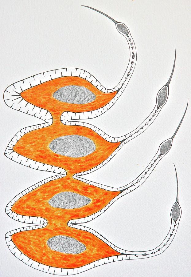 Birds Drawing - Eskimo Curlews by Antonio Casu