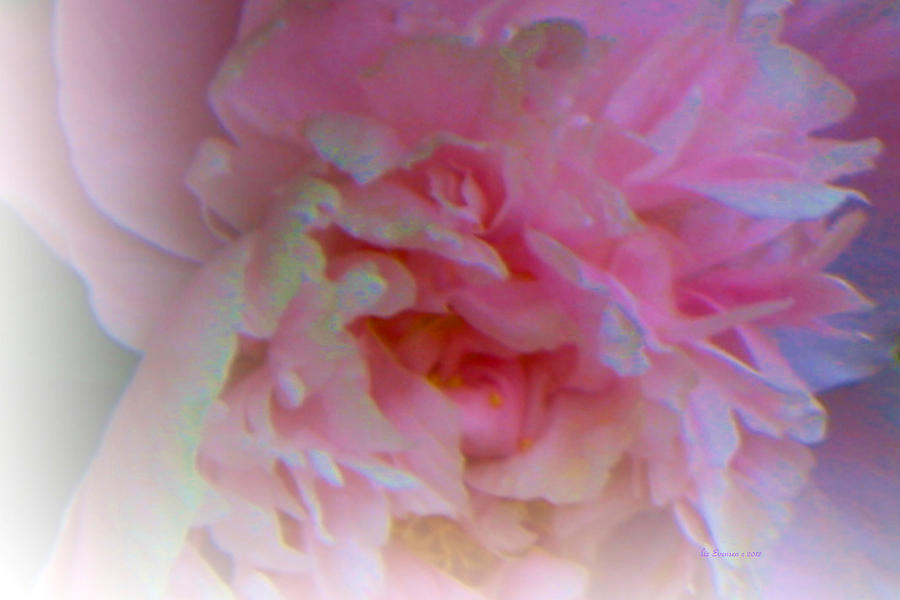 Peonie Paintings Painting - Ethereal Changing Mood by Liz Evensen