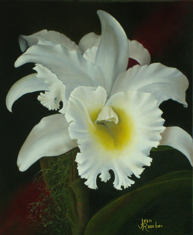 White Orchid Painting - Ethereal Dream  by Jean Rascher