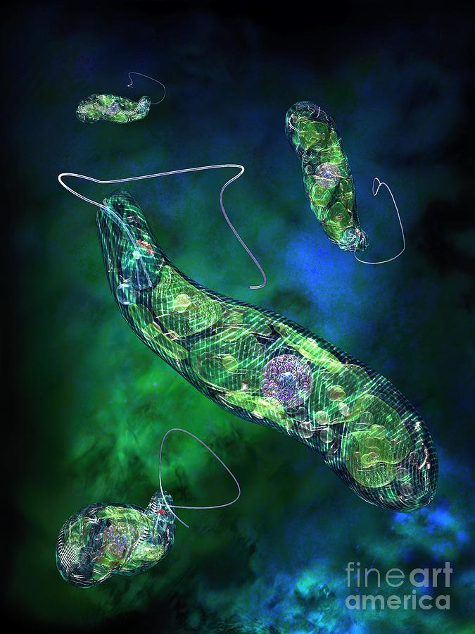 Biological Digital Art - Euglena Blue by Russell Kightley