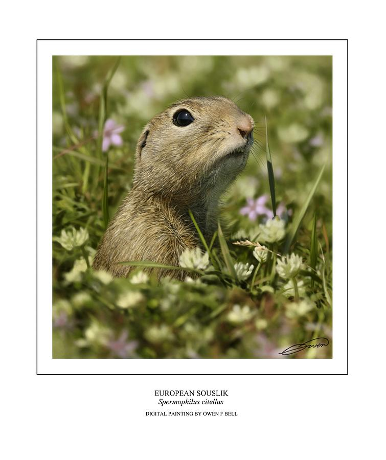 Ground Squirrel Digital Art - European Souslik by Owen Bell