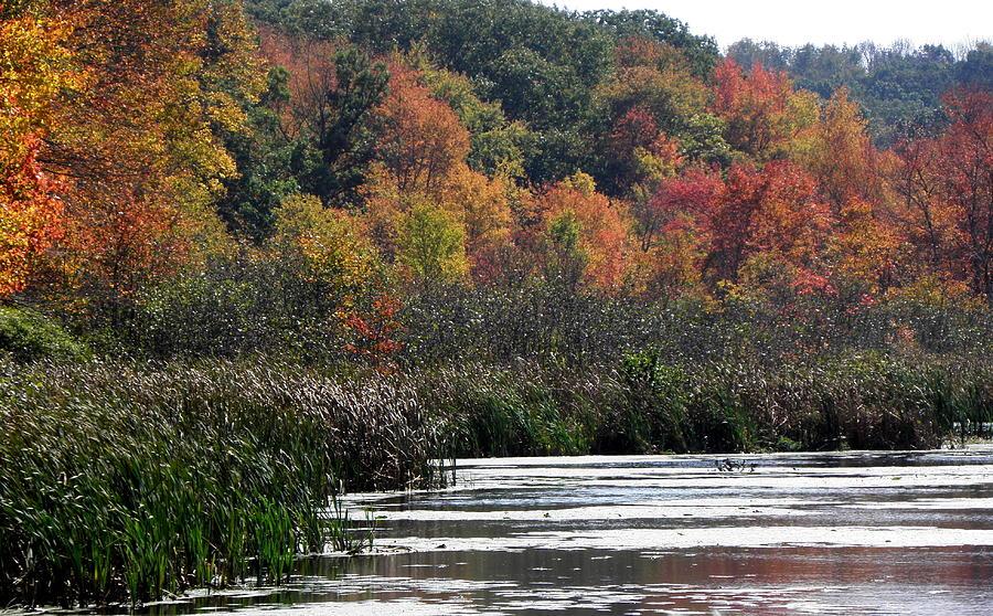 Swamp Photograph - Even Swamps Have Beauty by Kim Galluzzo Wozniak