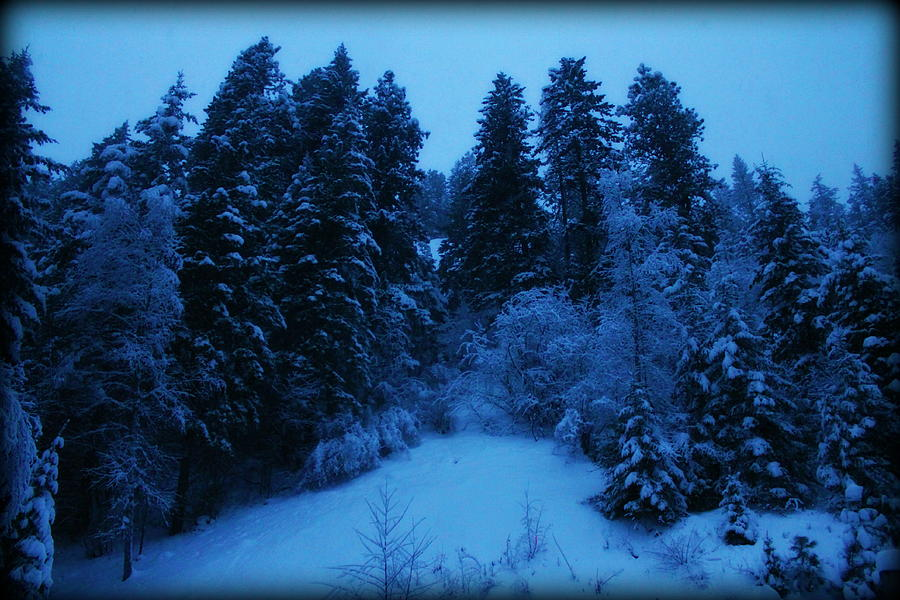 Winter Photograph - Evening Blue by Donna Duckworth