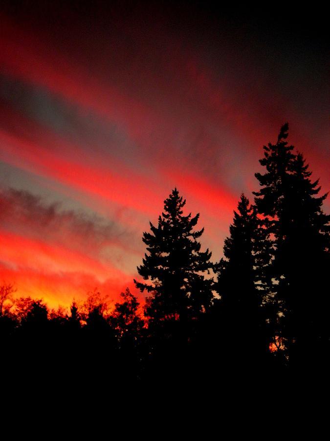 Nature Photograph - Evening Glow by Kevin D Davis