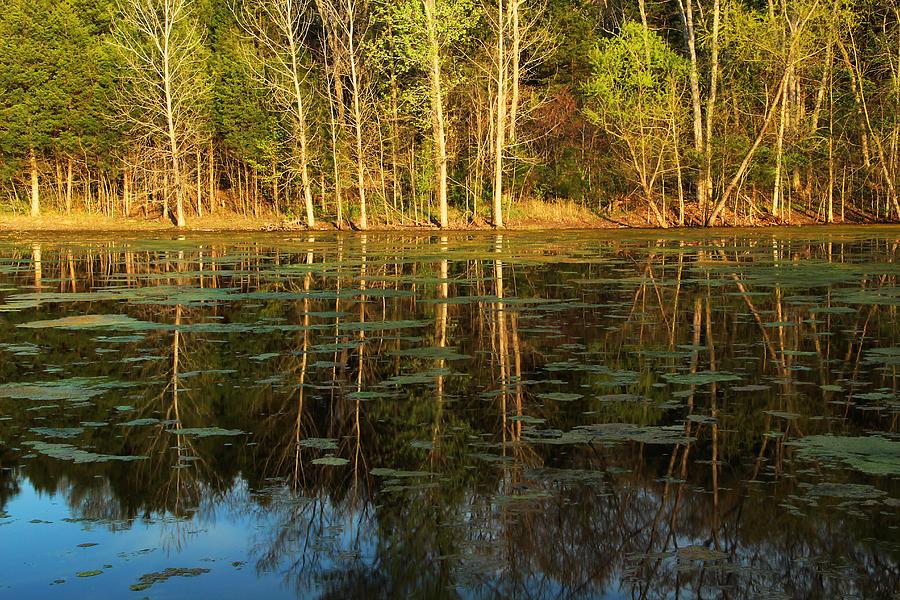 Pond Photograph - Evening Light On A Missouri Pond I by Greg Matchick