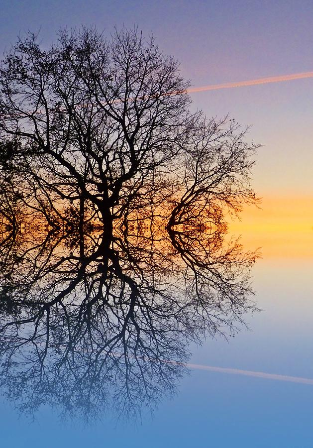 Winter Tree Photograph - Evening Sky Trails by Sharon Lisa Clarke