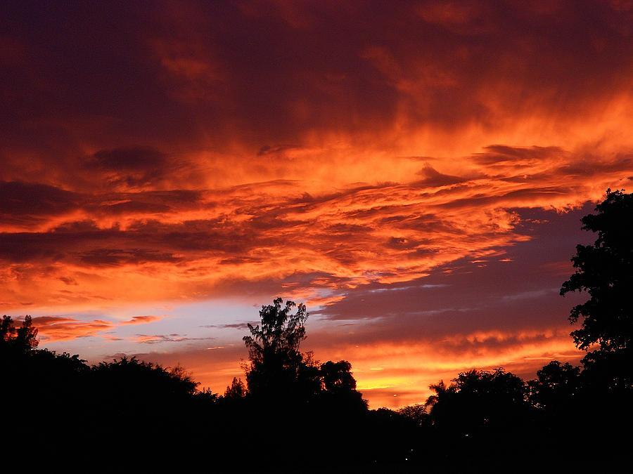 Nature Photograph - Evening Waltz by Sheila Silverstein