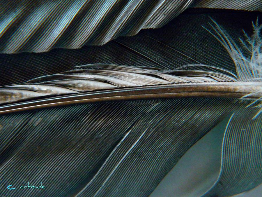 Nature Photograph - Every Shade by Chris Berry