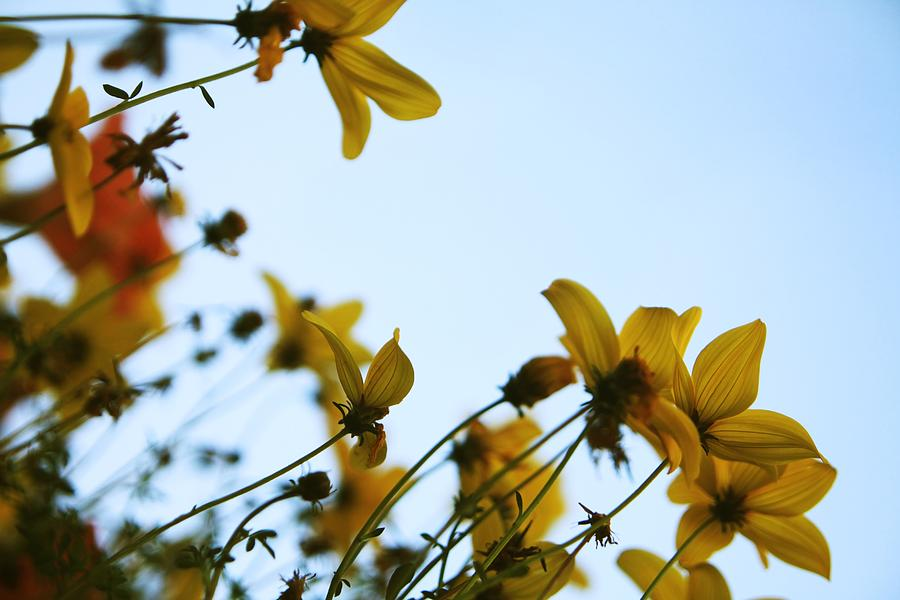 Flowers Photograph - Every Sight And Every Sound by Laurie Search