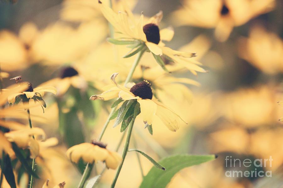 Flower Photograph - Everythings Peachy by Beth Engel
