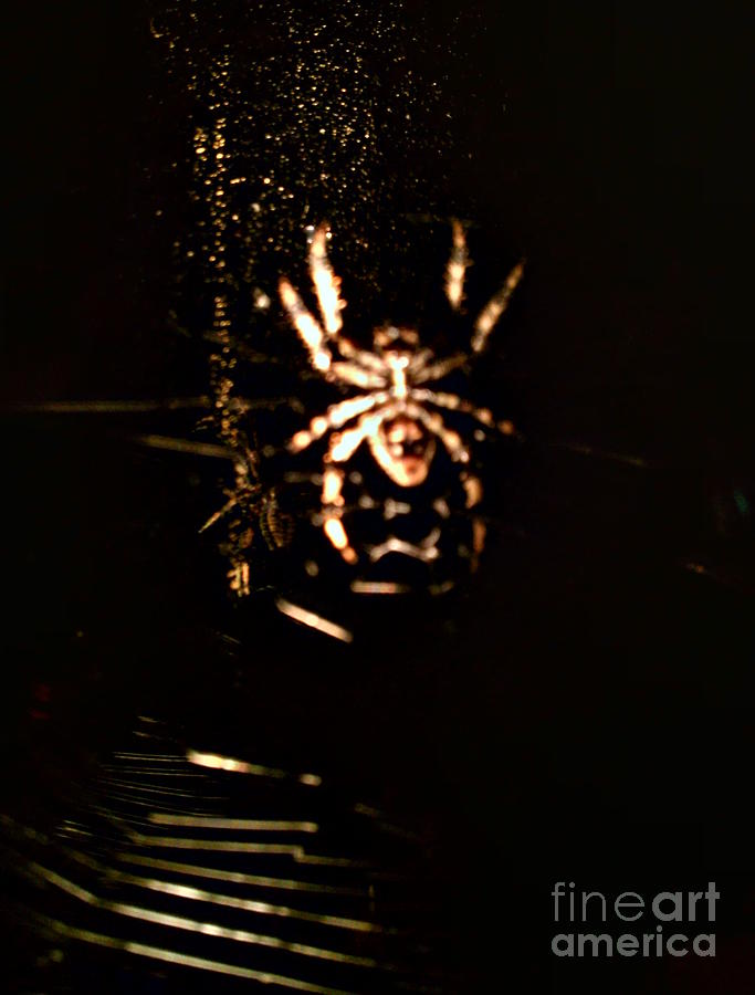 Spider Photograph - Evil Charlotte by Jayme X