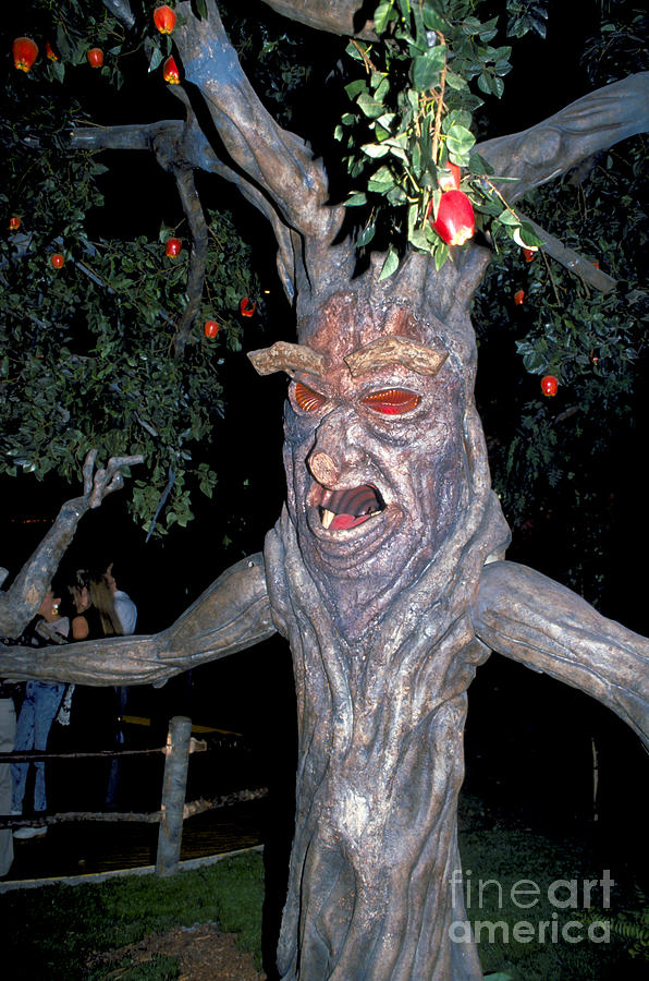 Apple Photograph - Evil Tree In Oz by Carl Purcell