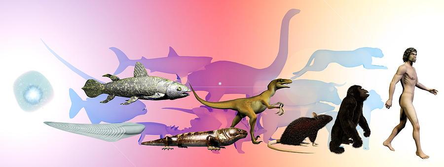 Dinosaur Photograph - Evolution Of Man by Christian Darkin