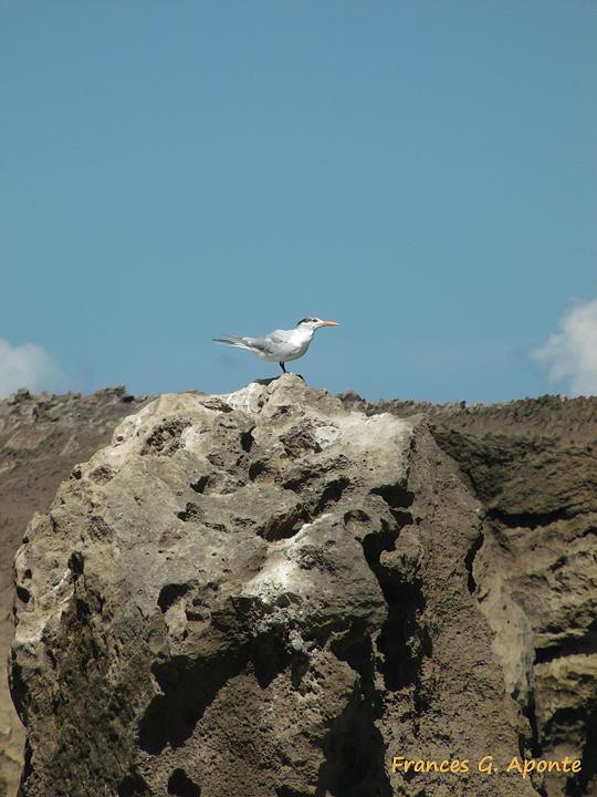 Rocks Photograph - Exoctic Birds by Frances G Aponte