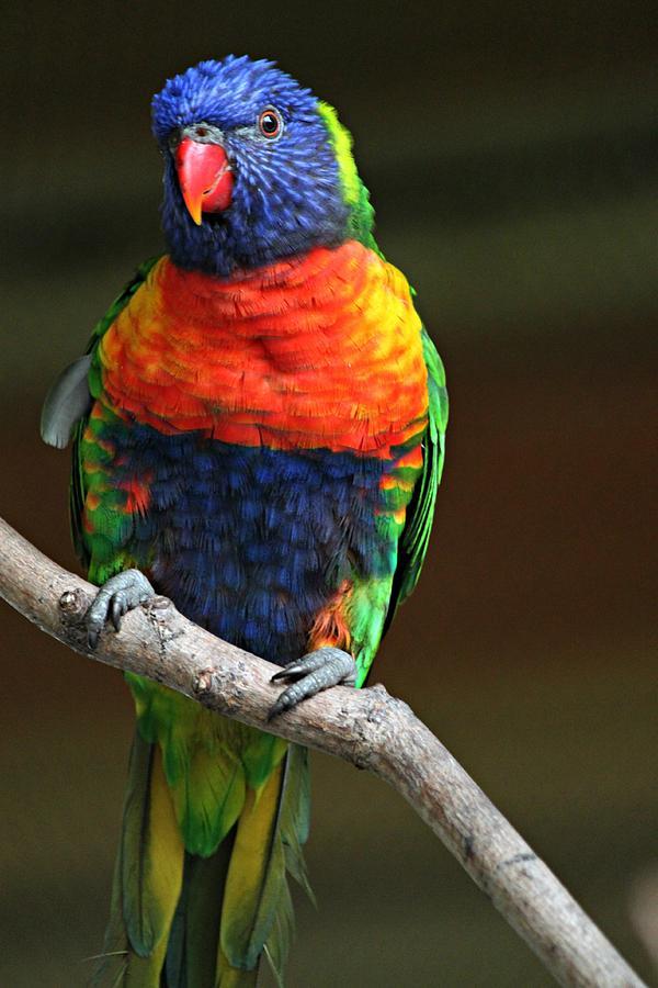 Exotic Bird Photograph by Martin Morehead