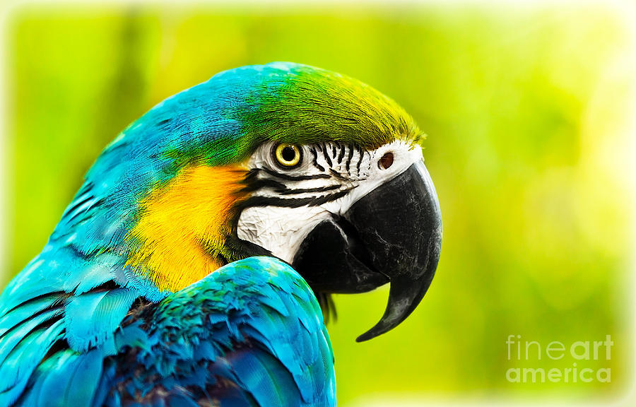 Exotic Colorful African Macaw Parrot Photograph By Anna Om