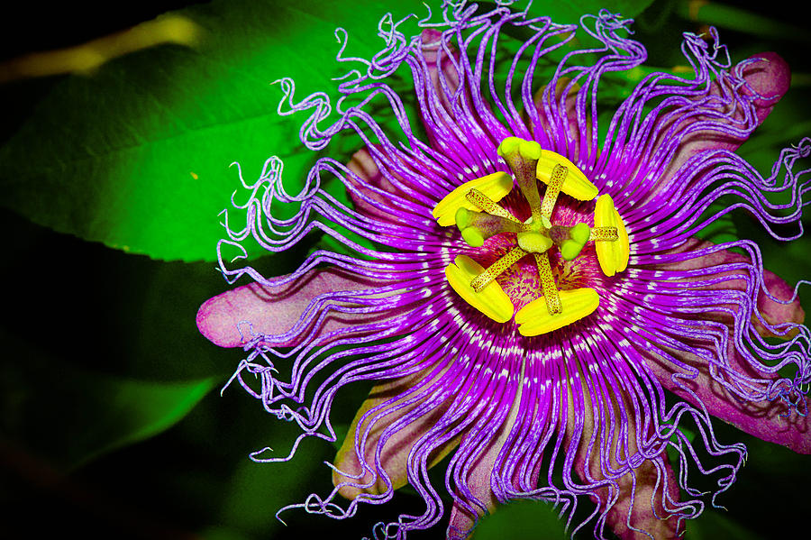 exotic flower photograph by michelle armstrong, Beautiful flower