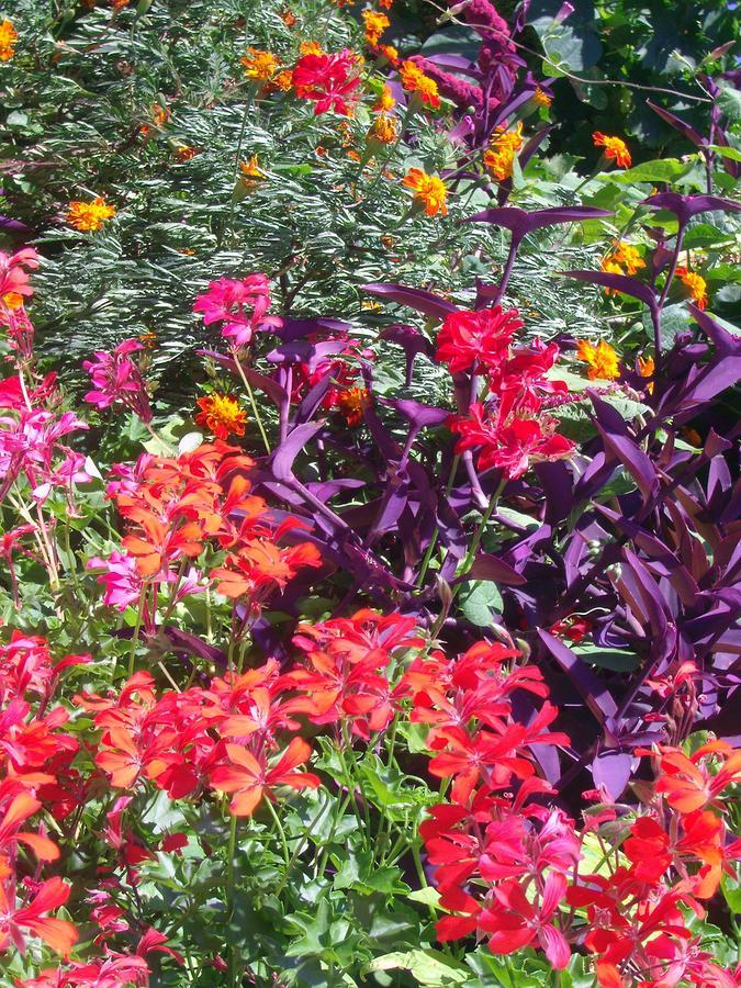 Exotic Flowers B by Michael Puya