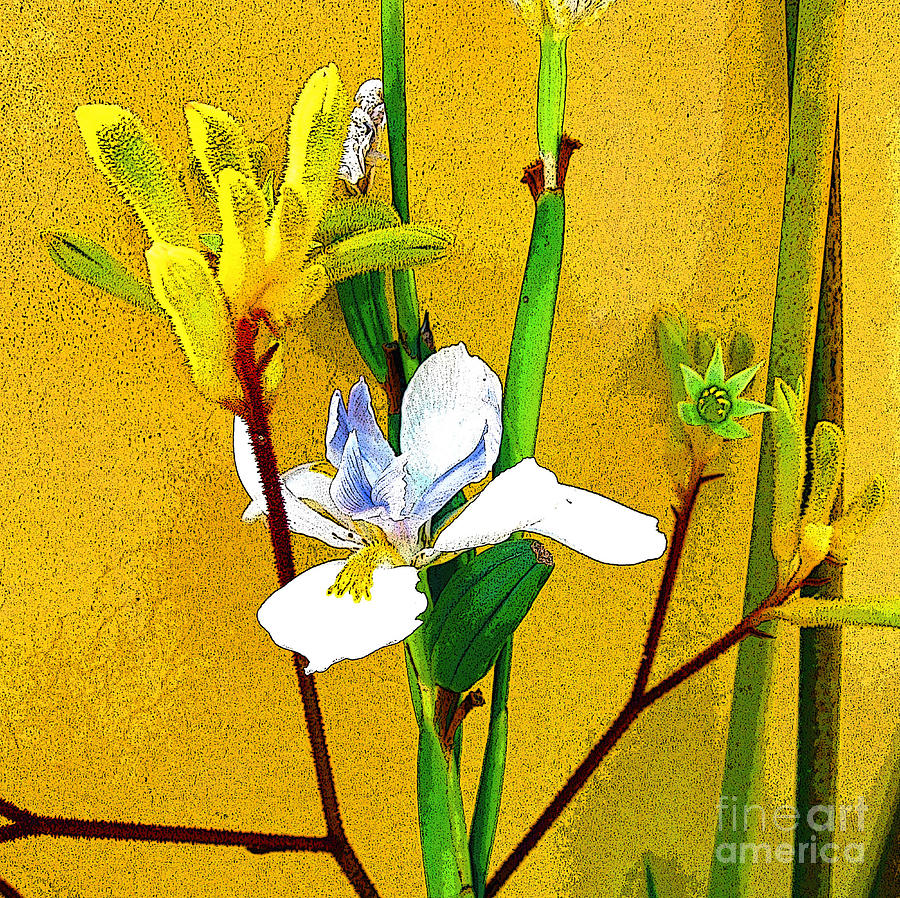 Flowers Photograph - Exotic Flowers by Jerome Stumphauzer