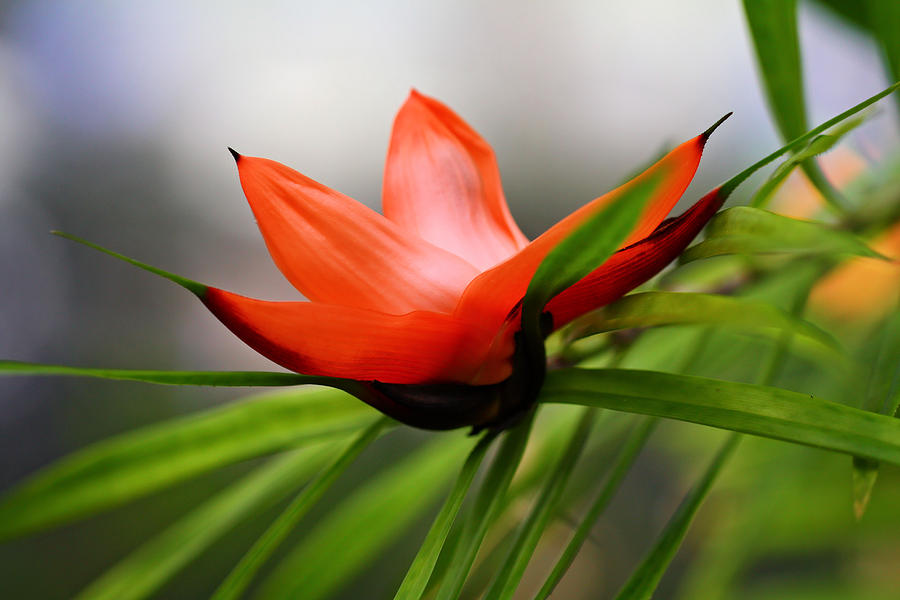 Tropical Floral Photograph - Exotic by Katherine White