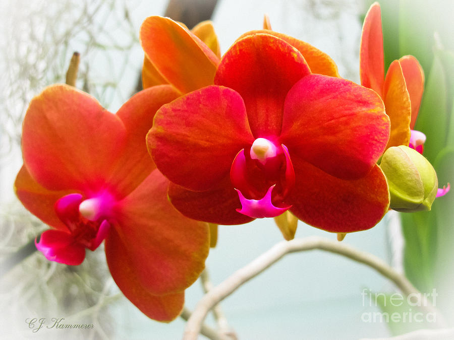 Orchids Photograph - Exotic Orchids by Colleen Kammerer