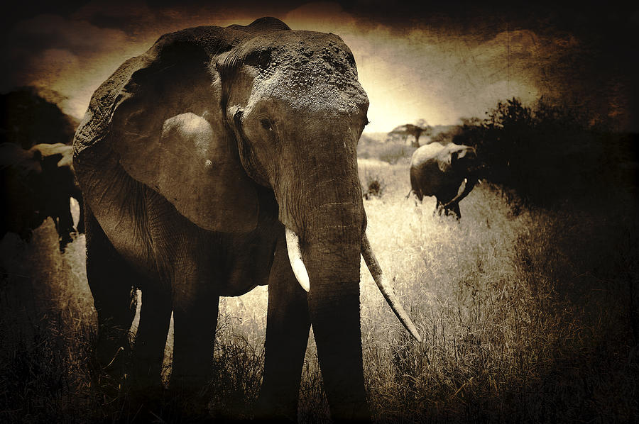 Elephant Photographs Photograph - Eye Catching Moments by Jess Easter