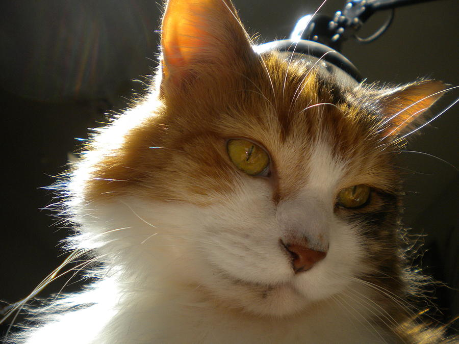 Cat Photograph - Eye Of The Beholder by Crespo