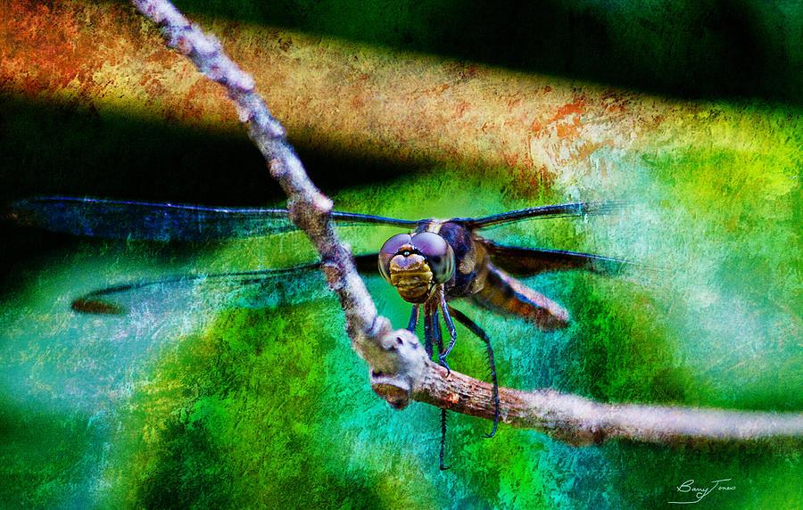 Dragonfly Photograph - Eye To Eye by Barry Jones