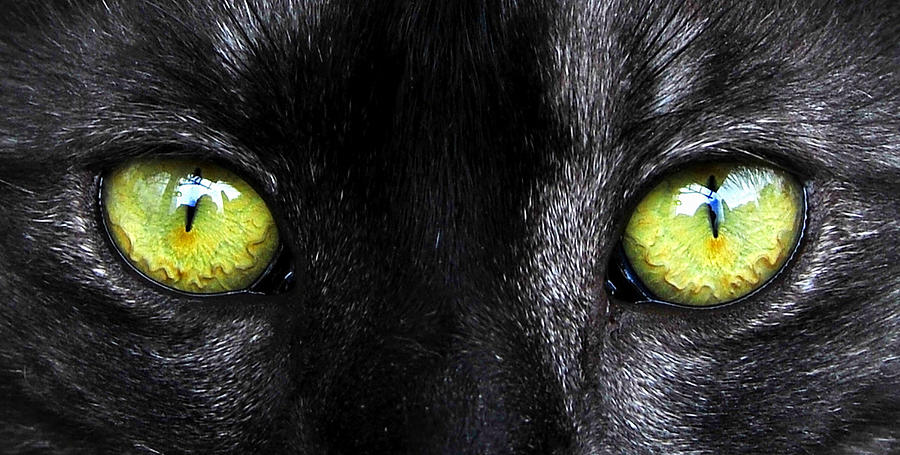Cat Photograph - Eyes by David Lee Thompson
