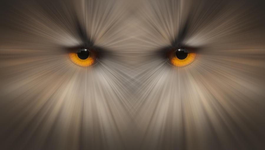 Eyes Of A Killer Photograph