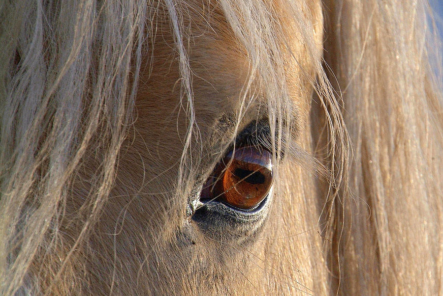 Eyes Of Beauty.. Photograph by Al  Swasey