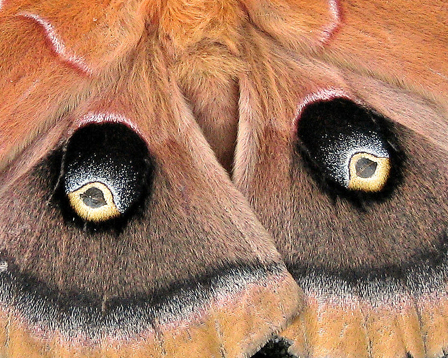 Nature Photograph - Eyes Of Deception by Peg Urban
