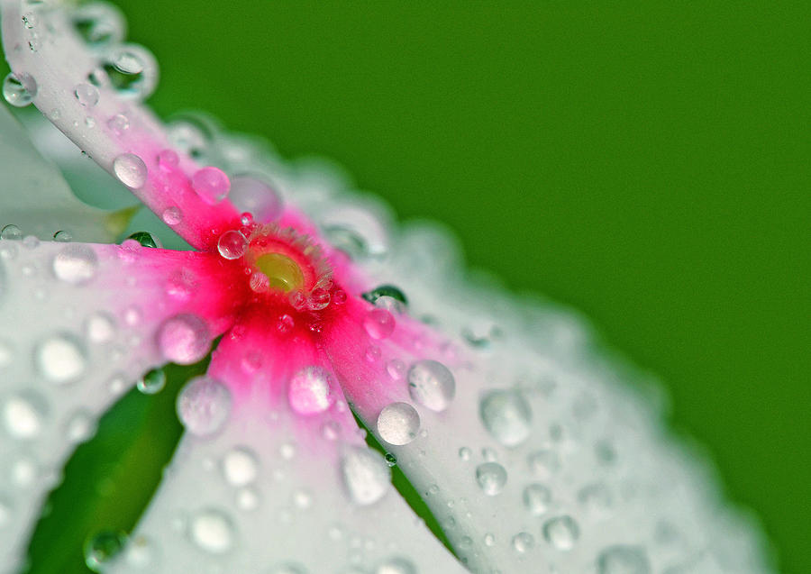 Flower Photograph - Eyes Wide Open by Melanie Moraga