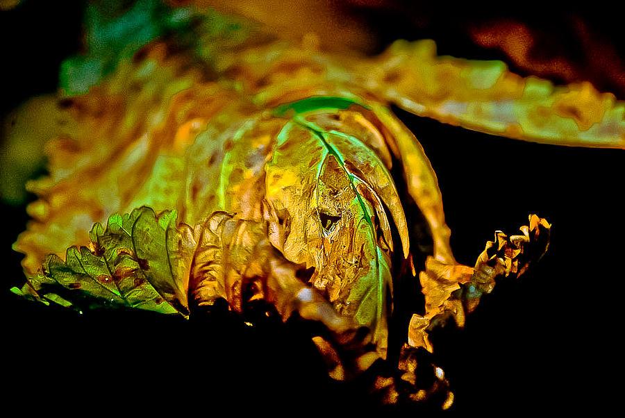 Leaf Photograph - Face Leaf by Anita Megyesi