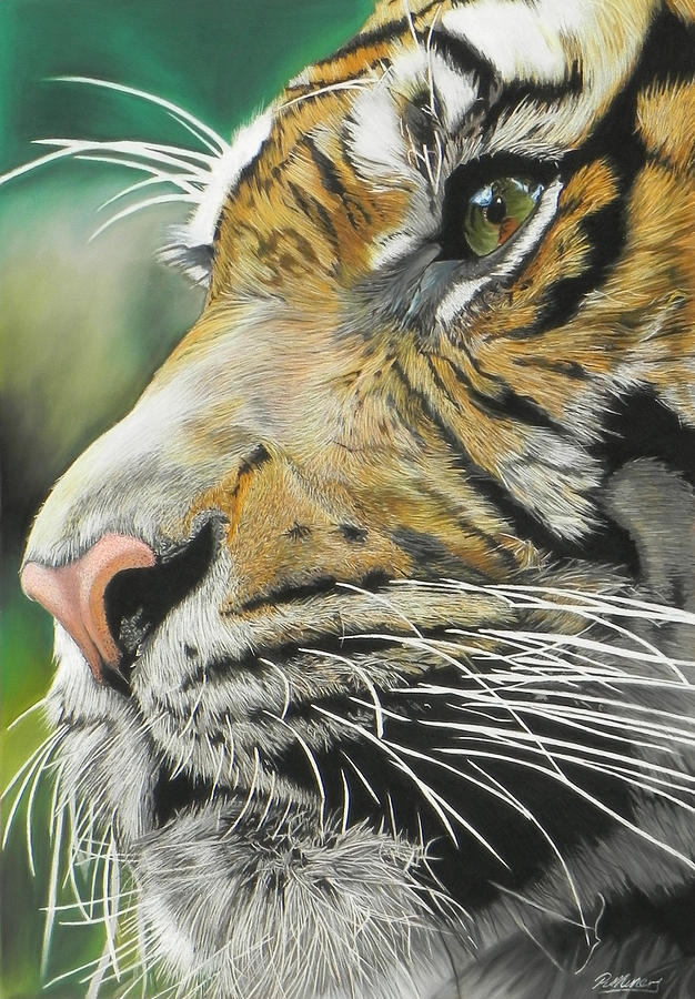Tiger Pastel - Face Of The Hunter by Paul Miners