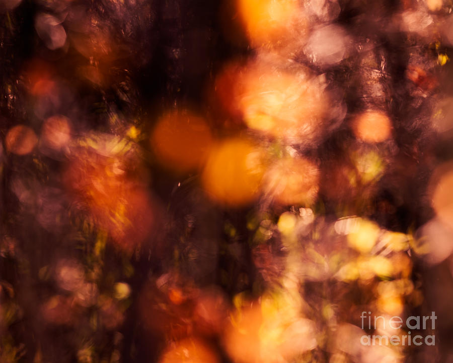 Leaves Photograph - Fading Fall Flame by Royce Howland